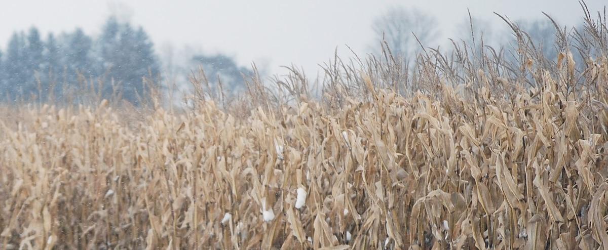 Neige hâtive: les producteurs de grains réclament une rencontre avec Québec