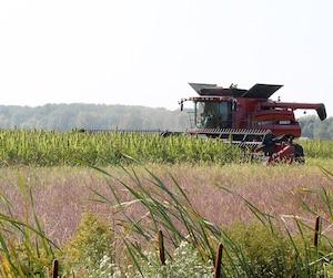 Les récoltes ont été bonnes cette saison dans les champs de chanvre industriel exploités par RDR Grains et semences à Nicolet.