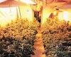 L'immeuble de la rue Lajeunesse à Montréal abritait trois serres totalisant 800plants de pot.
