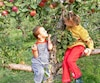 Cidredie la Pomme du Saint-Laurent.