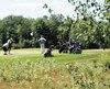 Des golfeurs sur un vert aux Boisés de Joly.