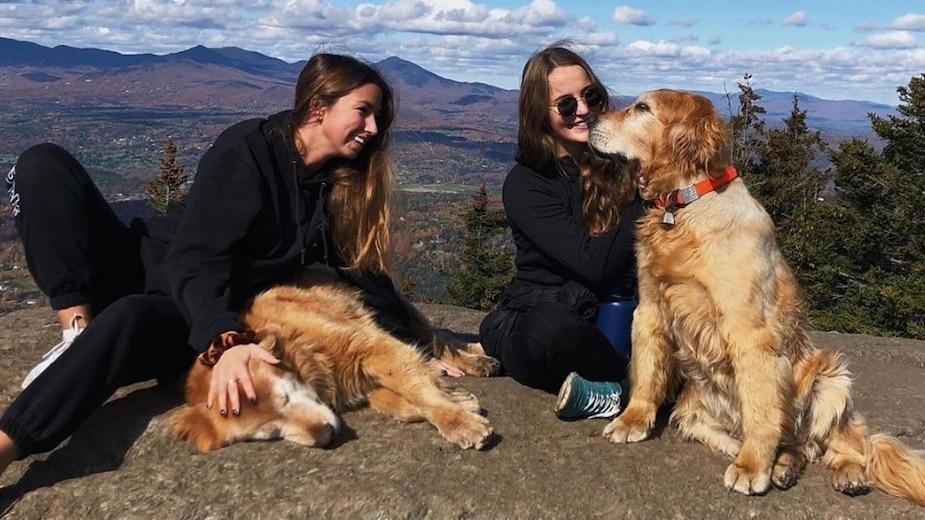 Image principale de l'article Des chiens qui accompagnent les randonneurs
