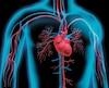 Herz-Kreislauf 1