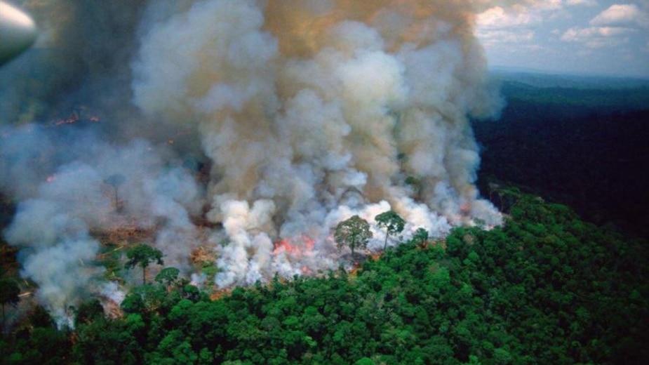 Feux en Amazonie ce qu'il faut savoir