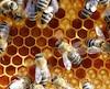 Plusieurs personnes piquées par des abeilles lâchées dans un stationnement
