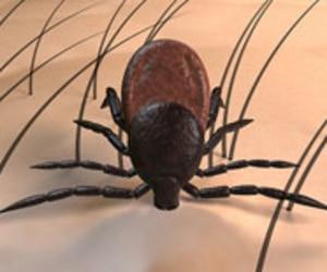 maladie de Lyme tique