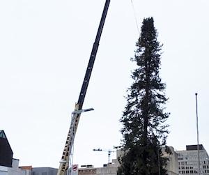 Une grue a démantelé le controversé conifère de la place des Festivals, à Montréal
