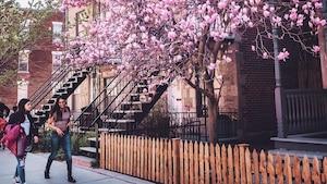 Image principale de l'article Les plus belles photos de Montréal au printemps