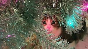 18 sapins de Noël «cat friendly»