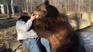 Image principale de l'article Un ours et un homme deviennent de meilleurs amis