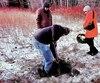 Des équipes citoyennes chassent les puits de gaz et de pétrole parfois centenaires laissés sans surveillance par Québec.