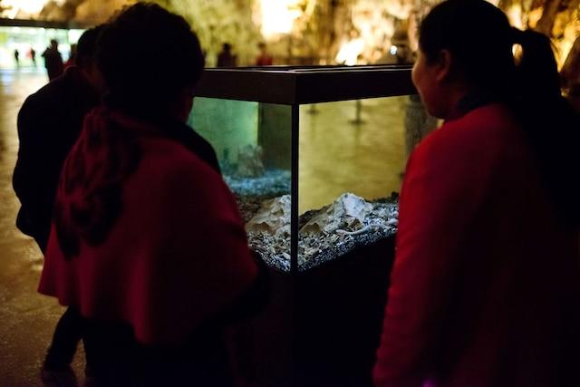L'aquarium dans le quel vit le «dragon» AFP PHOTO / Jure Makovec/AFP