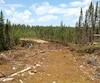 Québec a octroyé un permis de coupes de 200000m3 de bois au cœur du territoire atikamekw sans consulter la communauté.
