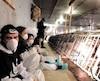 Voulant dénoncer le traitement accordé à des cochons dans une porcherie de Saint-Hyacinthe hier, des activistes du groupe DxE ont envahi l'établissement pour s'asseoir devant les cages renfermant les bêtes. Finalement, 11 d'entre eux ont été arrêtés.