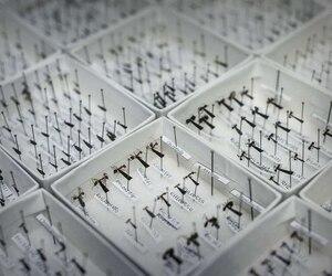 Espèces de fourmis affichés à l'Université de Hong Kong.