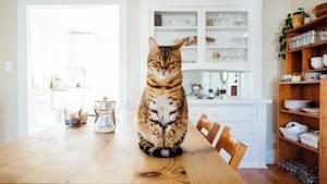 12 solutions pour les chats qui urinent partout