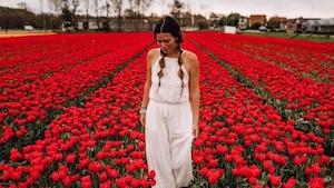 Image principale de l'article L'Immense Festival de Tulipes à 2 h 10 de Montréal