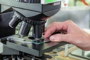 Microscope laboratoire bacterie