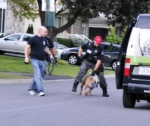 Le chien qui a attaqué la fillette a été saisi par les autorités pour des tests médicaux et une évaluation comportementale.