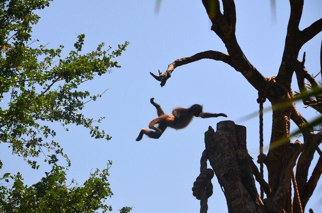 Il n'est pas rare de croiser des singes.