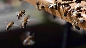 Les médecins découvrent des abeilles dans son œil