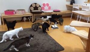 Une vidéo de chats surprenante!