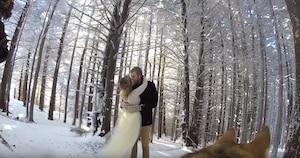 Image principale de l'article Un couple a laissé leur chien filmer leur mariage