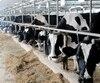 L'agriculture est l'une des 25 tables de négociations de l'ALENA qui se déplaceront à Montréal fin janvier pour la 6<sup>e</sup> ronde.