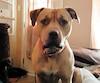 Bud a été euthanasié au printemps dernier à la suite d'une plainte reçue par la Ville de Sept-Îles. Son propriétaire prétend qu'il était toujours attaché à l'extérieur.