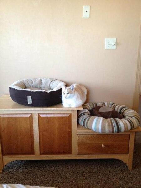 14 photos qui prouvent que les chats n'ont rien compris