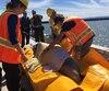Une opération de sauvetage sans précédent s'est déroulée jeudi dernier pour aider un béluga perdu dans une rivière.