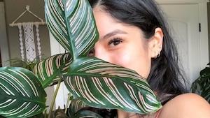 Image principale de l'article 7 plantes trop belles à adopter en 2020