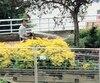 Des employés municipaux arrosaient les fleurs sous la pluie à Trois-Rivières vendredi dernier.