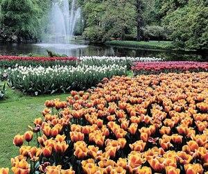 Les jardins Keukenhof.