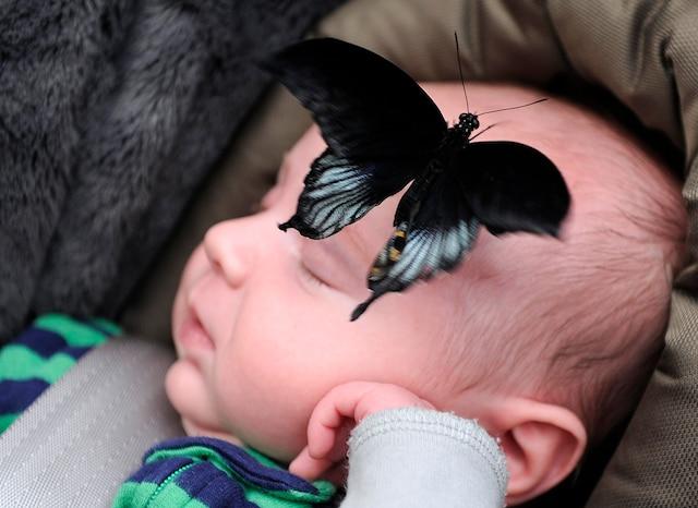 (11)-01-Papillons   Papillons en fete , vendredi le 23 Fevrier  2018 , au centre Jardin Hamel a Quebec. Le petit Zachary. PHOTO:JEAN-FRANCOIS DESGAGNES/JOURNAL DE QUEBEC/AGENCE QMI.