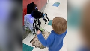 Image principale de l'article Effrayé, un enfant frappe une araignée décorative