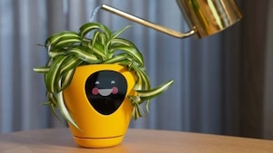 Un pot à la rescousse des mauvais jardiniers