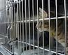 bloc chat animaux spca fourrière
