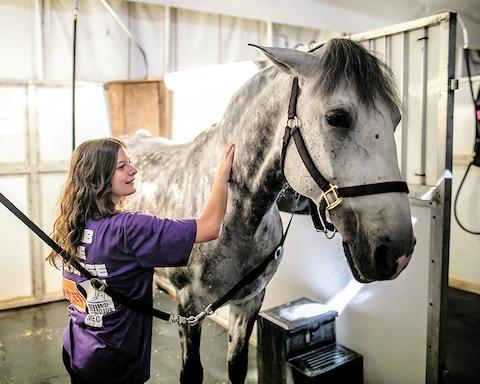 Elodie Aubchon ducha o fadista cabalo.