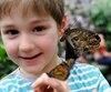Deux ans après l'incendie qui avait complètement rasé ses installations, le Centre jardin Hamel revient avec son évènement Papillons en fête, présenté jusqu'au 2 avril.