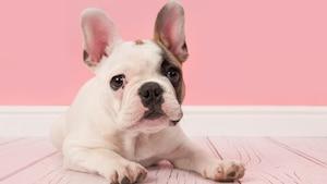 4 critères pour définir le chien parfait pour vous