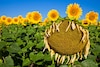 Les compétences, comme les fleurs d'une plante, naissent, vivent et souvent, se flétrissent.