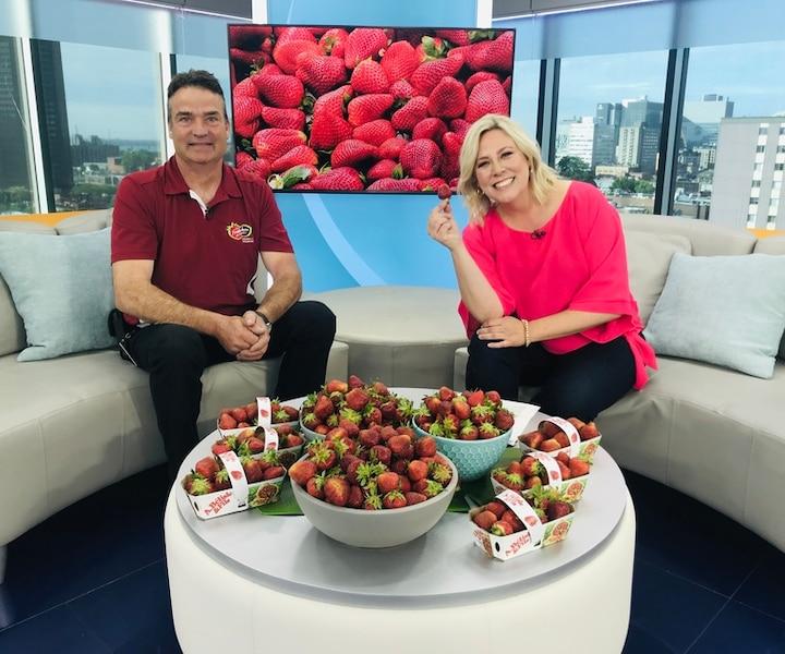 Début de la saison des fraises du Québec