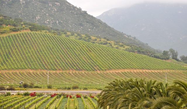 Les vignobles de la vallée de Casablanca, entre Santiago et Valparaiso, dans le centre du pays.