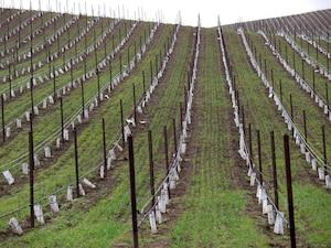 Les collines bucoliques du vignoble qui intéressaient tant John Babikian en Oregon.
