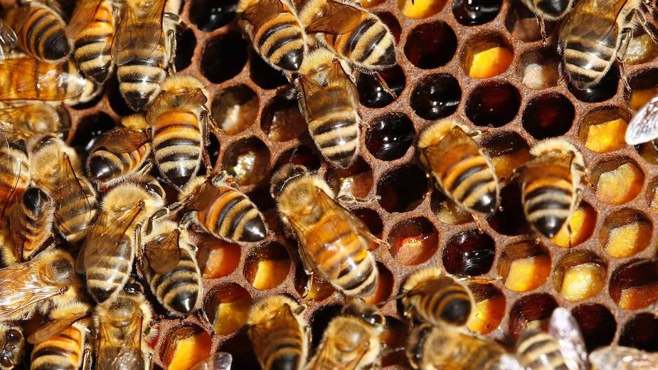 Une ruche lui tombe sur la tête