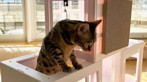Image principale de l'article Ces «condos» pour chats sont TROP mignons