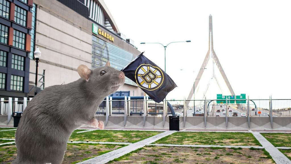 Des rats au TD Garden de Boston?