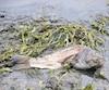 Bloc poissons morts
