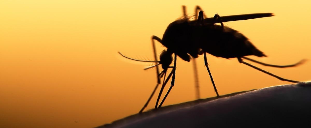 Méfiez-vous des piqûres de moustiques! | JDM